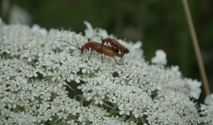 Mating insects (crickets?)