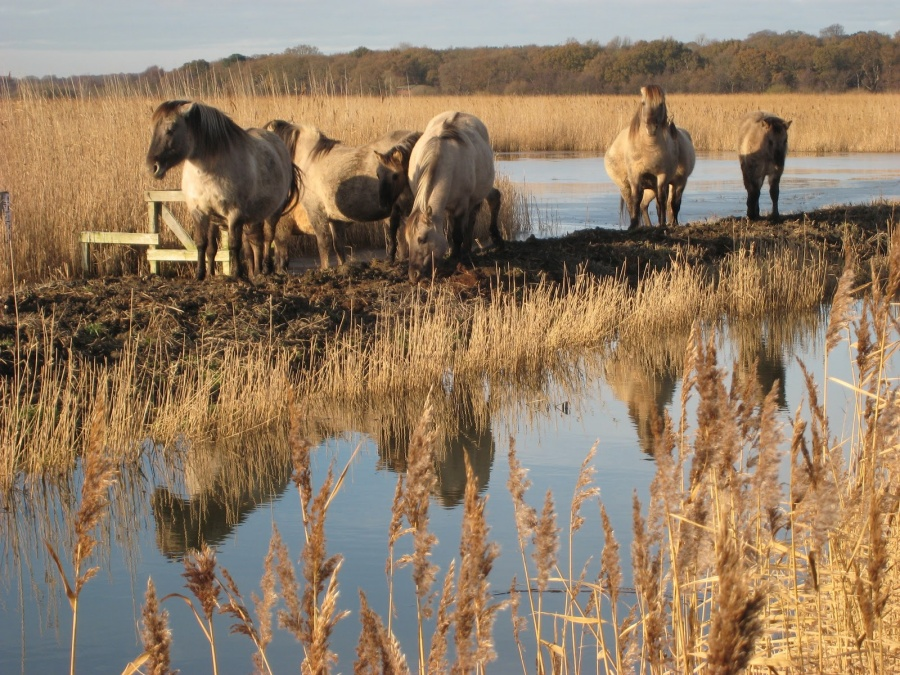 The RSPB Reserve at Minsmere