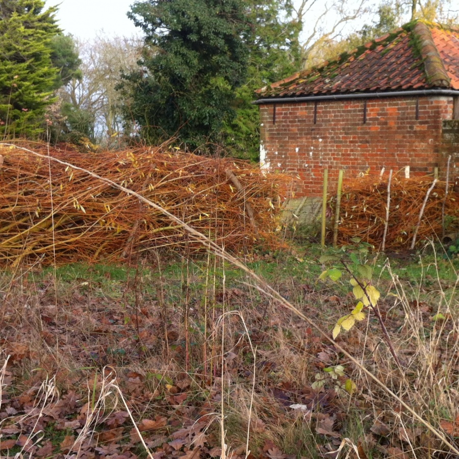 Dead hedging in the goose paddock
